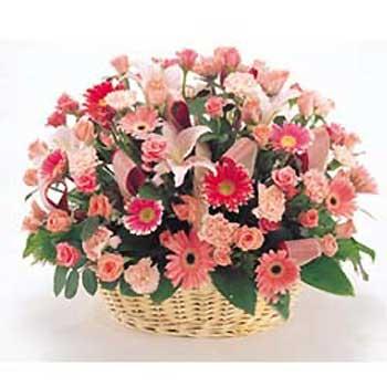 重庆渝北区网上花店--[春天的阳光]商品内容:22朵红